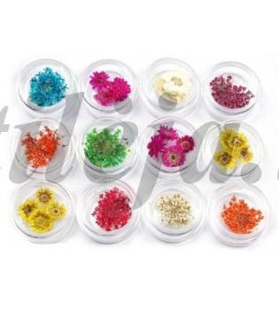 Sausos gėlytės nagams dekoruoti